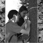 apprendre ave des lichens
